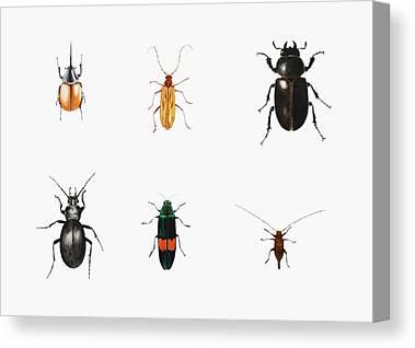 Bugs Canvas Prints