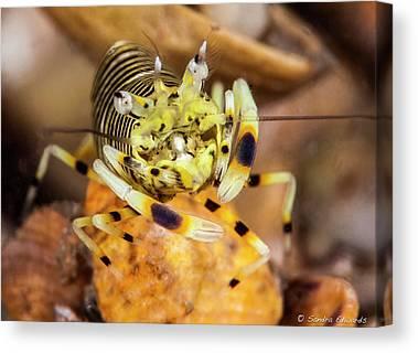 Sandy Bumblebee Canvas Prints