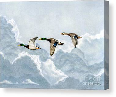 Ducks In Flight Canvas Prints