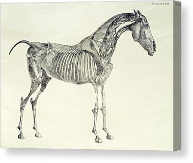 The Horse Drawings Canvas Prints
