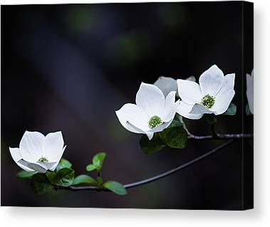 Dogwood Lake Canvas Prints