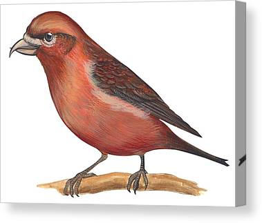 Crossbill Canvas Prints