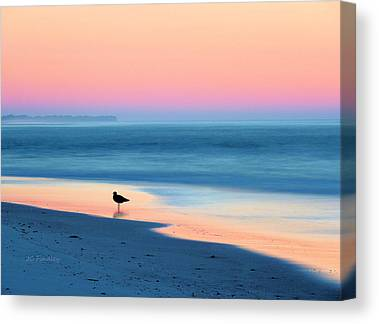 Sea Birds Photographs Canvas Prints