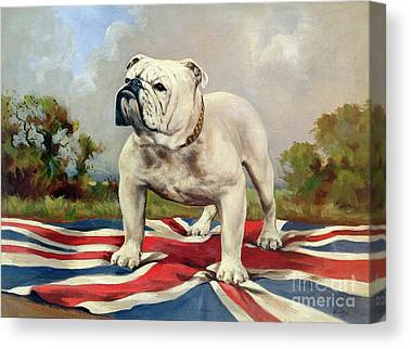 English Bulldog Canvas Prints