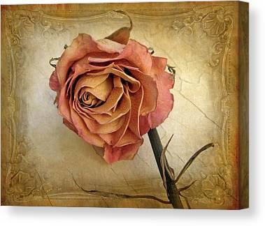 Rose Petals Canvas Prints