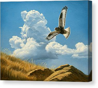 Flying Hawks Canvas Prints