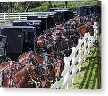 Carriage Team Canvas Prints