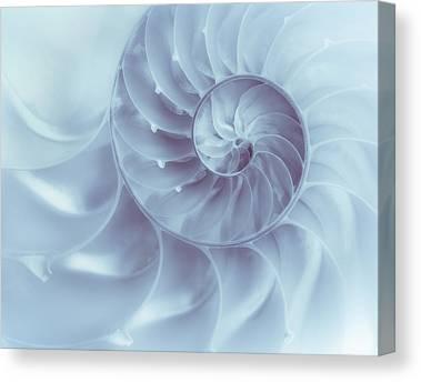 Molluscs Canvas Prints