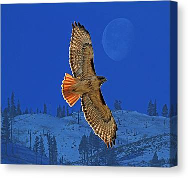 Hawk Canvas Prints