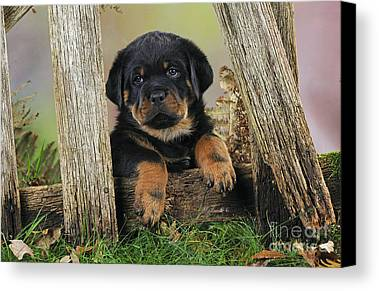 Designs Similar to Rottweiler Puppy Dog
