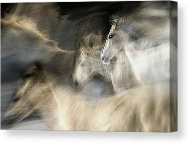 Horse In Motion Art | Fine Art America