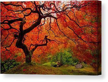 Trees Canvas Prints