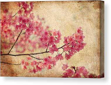 Blossom Canvas Prints