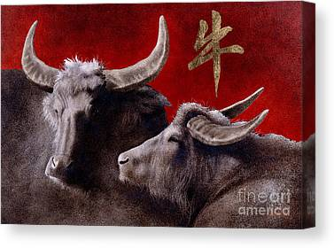 Year Of The Ox Canvas Prints   Fine Art