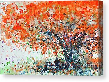 Flamboyant Tree Canvas Prints