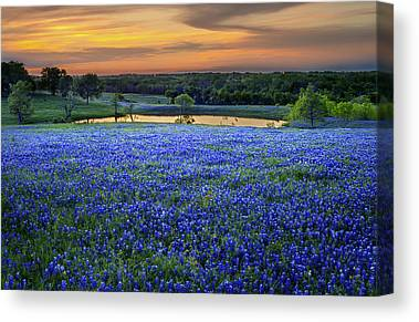Texas Wildflowers Canvas Prints