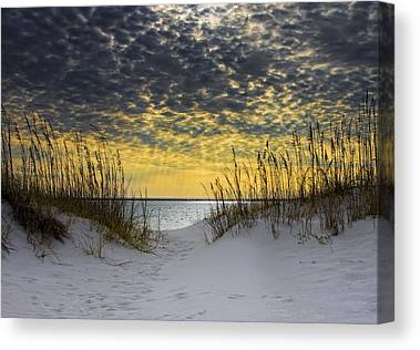 Sea Oats Canvas Prints