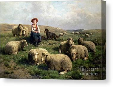 Sheep Dog Canvas Prints
