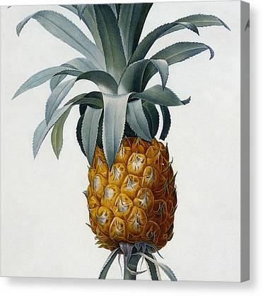 Bromeliaceae Canvas Prints