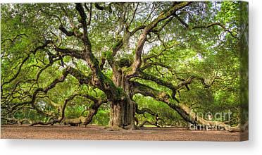 Oak Tree Canvas Prints