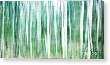Birch Forest Photographs Canvas Prints