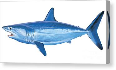 White Tip Sharks Canvas Prints