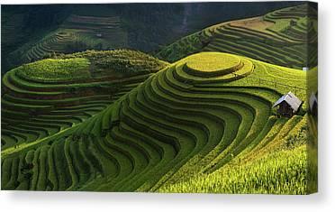 Rice Canvas Prints