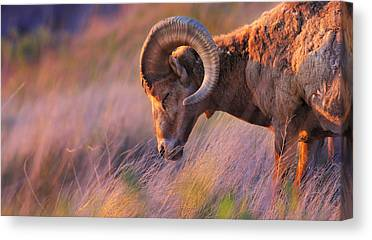 Bighorn Mountains Canvas Prints