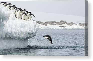 Antarctic Canvas Prints