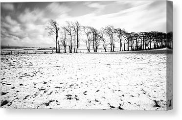 Trees In Snow Canvas Prints