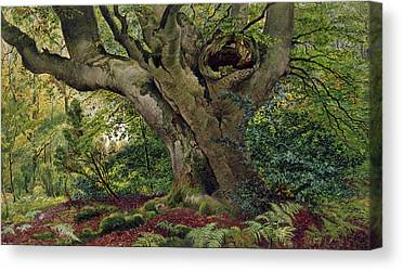 Forest Floor Drawings Canvas Prints
