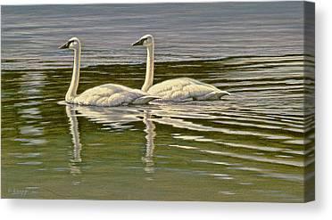 Trumpeter Swan Canvas Prints