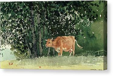 Cow Canvas Prints