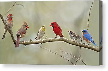 House Finch Canvas Prints