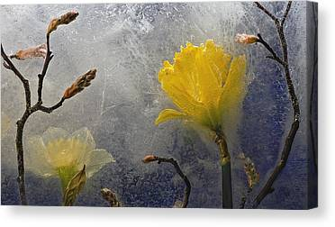 Daffodils Photographs Canvas Prints