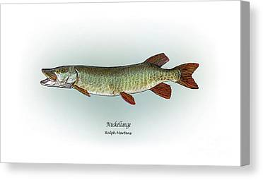 Muskellunge Canvas Prints