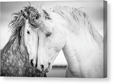 White Horse Canvas Prints