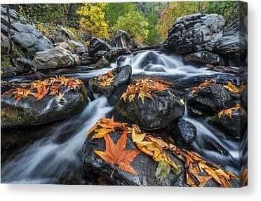 Oak Creek Canyon Canvas Prints