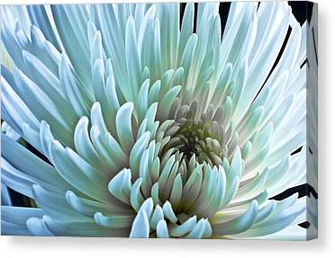 Plexiglass Canvas Prints