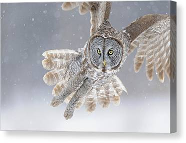 Winter Birds Canvas Prints
