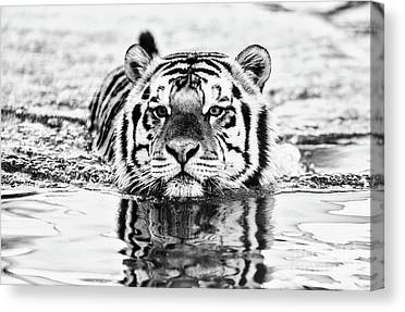 Mike The Tiger Canvas Prints