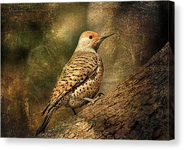 Northern Flicker Photographs Canvas Prints