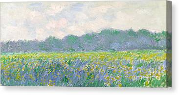 Irises Canvas Prints