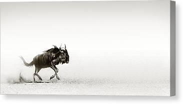 Kalahari Desert Canvas Prints