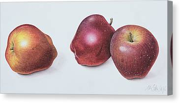 Apple Drawings Canvas Prints