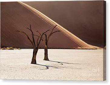 Sandy Desert Canvas Prints