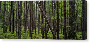 Manistee National Forest Canvas Prints