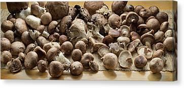 Portobello Mushroom Canvas Prints
