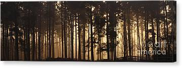 Cannock Chase Canvas Prints