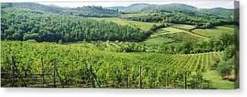 Chianti Vines Photographs Canvas Prints